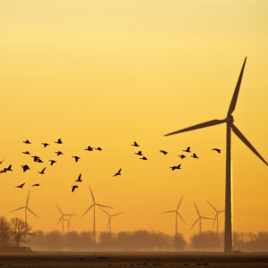 Rural America Keeps Rejecting Big Wind
