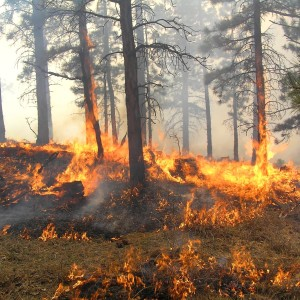Let the Markets Help Our Forest Fire Issue