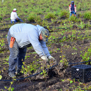 A Third Way to Fix the Undocumented Workers Problem