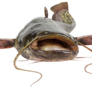 Catfish Regulation Doesn't Pass the Smell Test