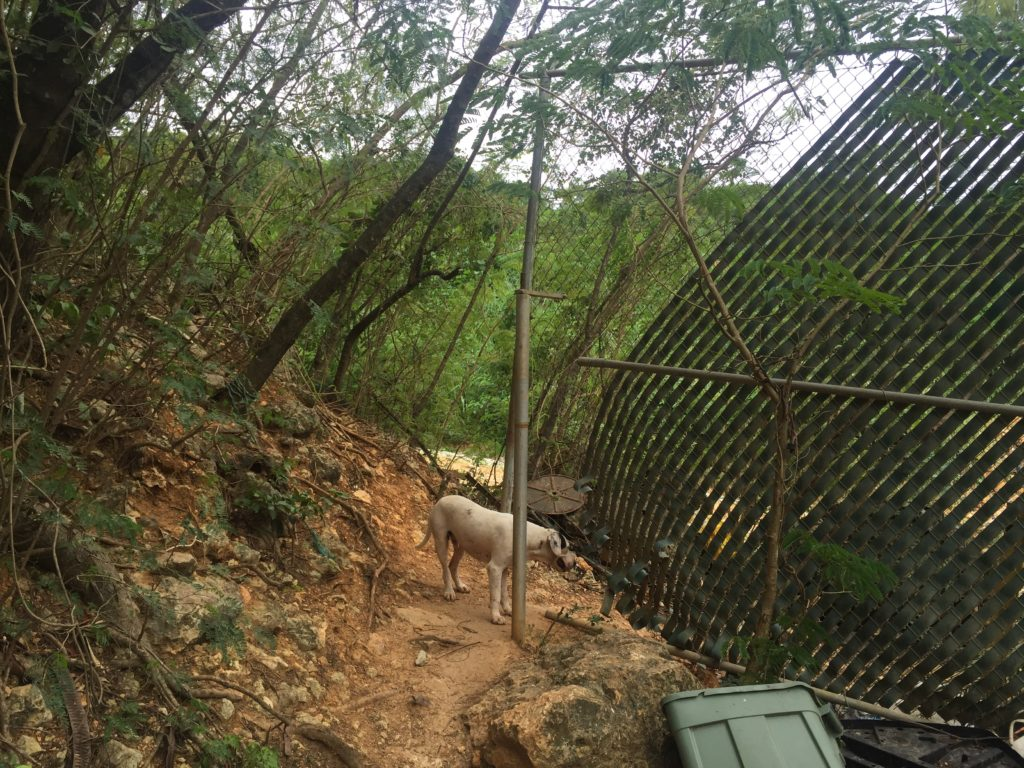 An unfinished fence near a resident's home in Toa Baja. The landfill is right next to their house and the space between the fence and the natural mountain is big enough for people, dogs, and other animals to pass through. (Photo Credit: Kyle Plantz/InsideSources)