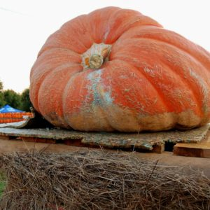 Oh, My Gourd! Pumpkins Are on the Loose