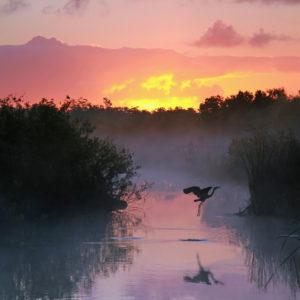 Big Sugar's Assault on the Everglades