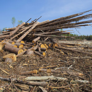 Biomass: America's Not-So-Clean Green Fuel