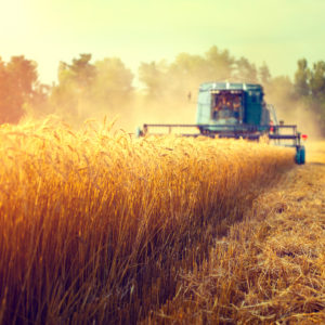 More Mouths to Feed: What Is the Future of Sustainable Agriculture?
