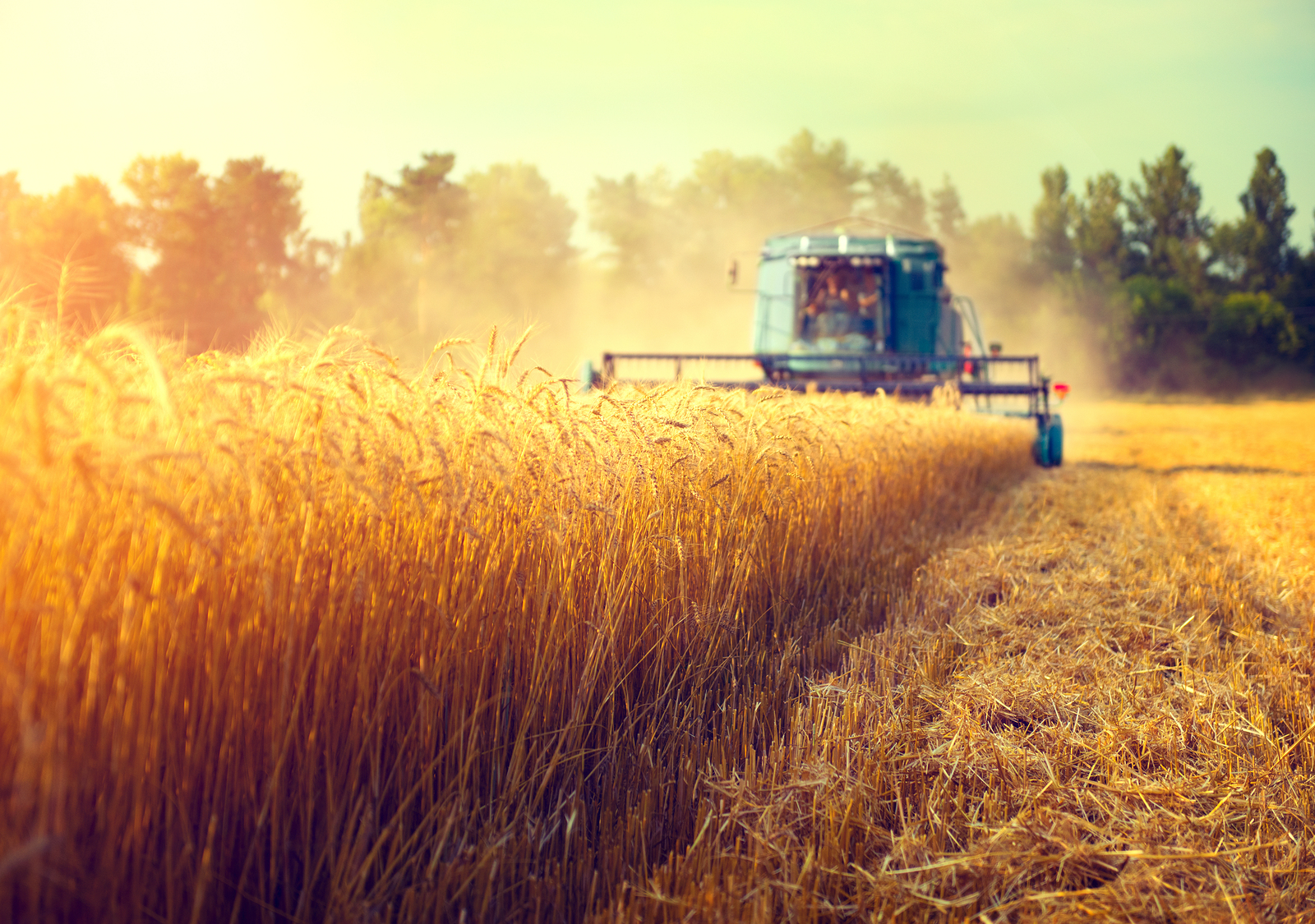 the future of the american agricultural Youth: the future of agricultural cooperatives there are some 500 million smallholder farms worldwide these small farms produce about 80 percent of the food consumed in asia and sub-saharan africa.