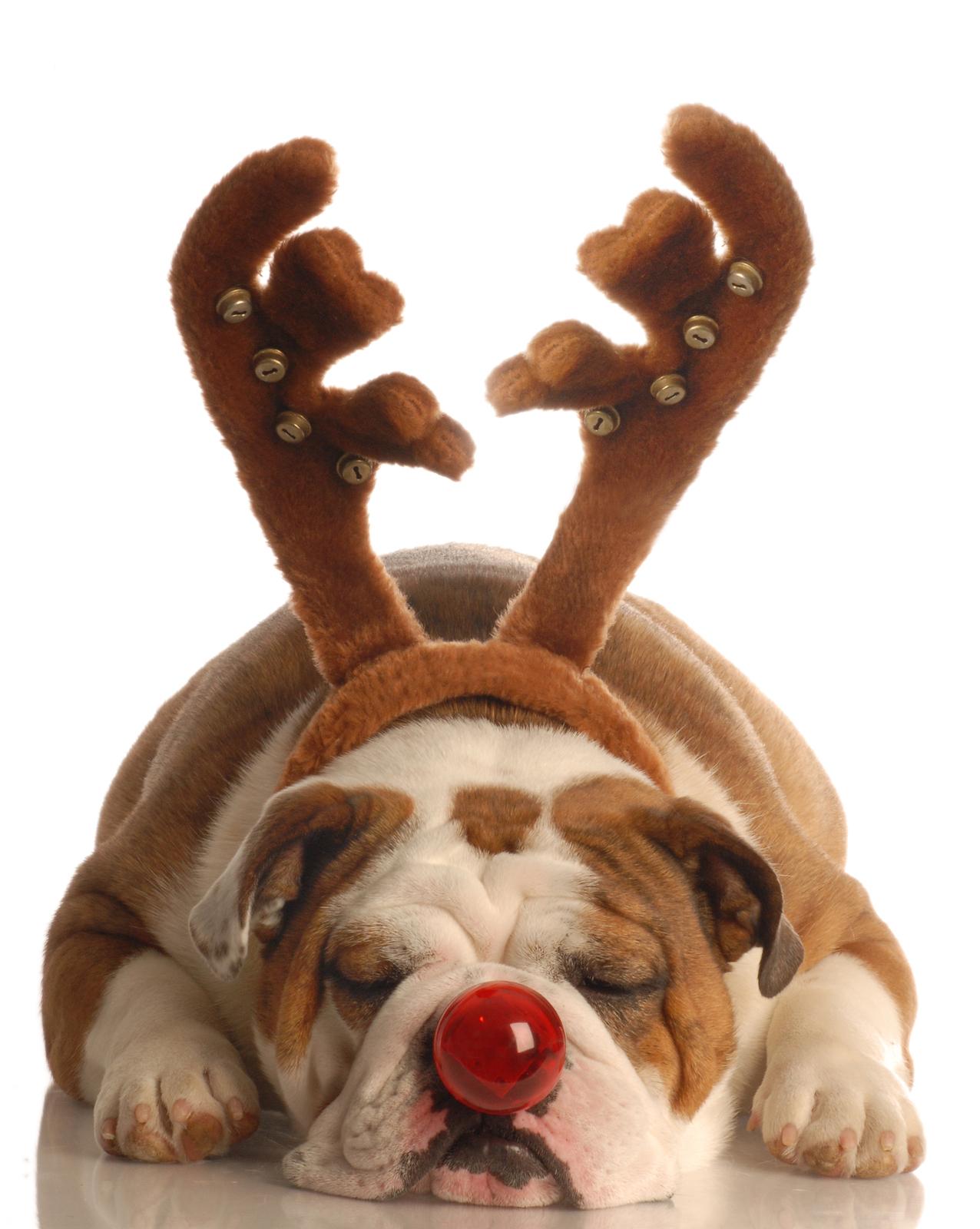 The King File - Christmas, Dog Poems