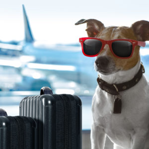 The Late, Great von Hoffman; Pets on Airlines; Etc.