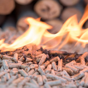 Will Sununu's New Energy Plan Finally Burn Up Biomass Subsidies?