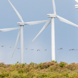 Not OK: Oklahoma Weighs Approval of New Wind Energy Project, Relies on Oil Taxes for Revenues