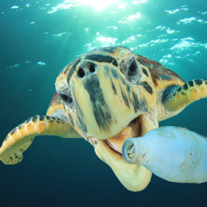 Point: Want Less Ocean Plastic Pollution? Make Less Plastic
