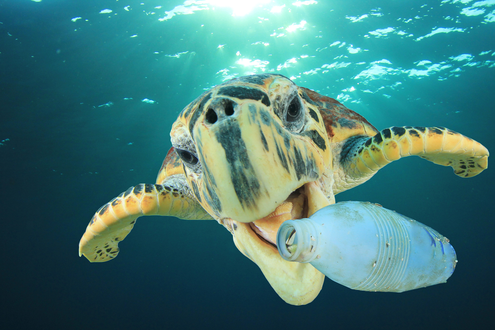 Point: Want Less Ocean Plastic Pollution? Make Less ...