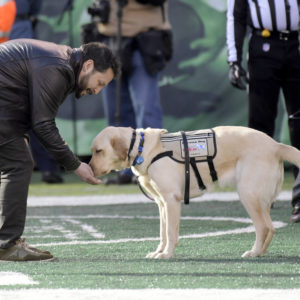 More Rigorous Service Dog Credentials Can Protect Veterans and Businesses