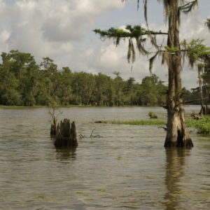 """What We're Seeking Is a Lot Bigger Than Stopping the Pipeline"": Atchafalaya Basinkeeper Seeks Accountable Development"