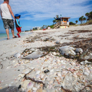 Stemming Florida's Red Tide Requires Government and Business to Work Together