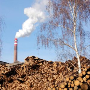 The Strange Bedfellows of Biomass Politics