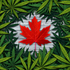 Canada Has Gone to Pot; Demand Is High, Supply Is Low