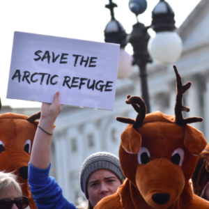 Taking the Fight Over ANWR to Twitter
