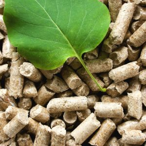 Data Finds North Carolina Forests Growing as State Considers Wood Pellet Plant Expansion