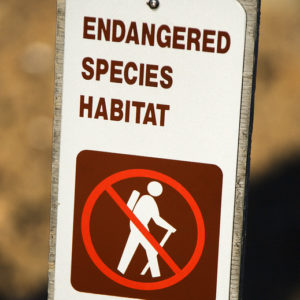 Modest Trump Admin Reforms Could End Worst Abuses of Endangered Species Act