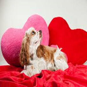 Valentine's Dog Days of Love, but Not for Trump