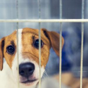 Coronavirus Highlights Danger of Importing Pets from High-Risk Regions
