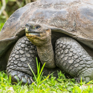 How Tortoise Rides Led to Hope for COVID-19 and Alzheimer's