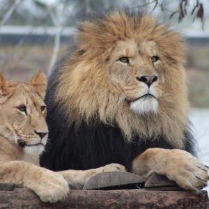 CECIL Act Threatens African Wildlife Conservation Efforts