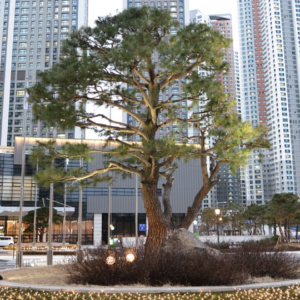 City Story — Planting Trees for Health and Data-Mining Sewage