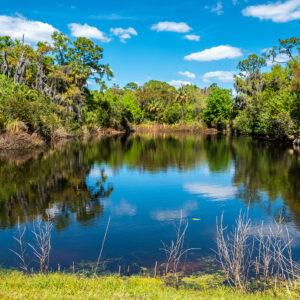 Biden Reviews Endangered Species and Wetlands Protection