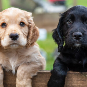Ban on Dogs From 'High-Risk' Countries a Wake-up Call About Importation Health Crisis