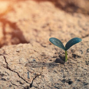 Drought Will Destabilize the West, Forcing Huge Changes